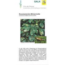 Rosskastanien-Miniermotte (Downloadversion)